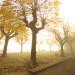 Bettona_Autumn